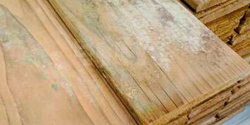 Spots of mildew in timber
